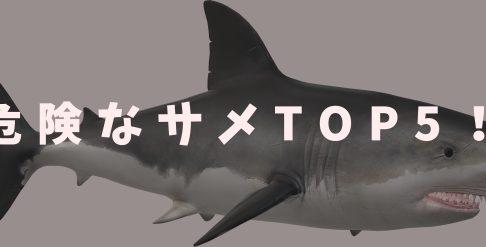 危険なサメTOP5